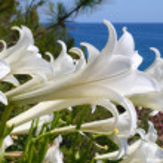 White flowers — Stock Photo #1265701