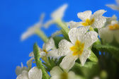 White flowers on blue background — Stock Photo