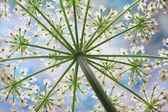 Vit blomma — Stockfoto