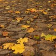 Stock Photo: Cobblestone road