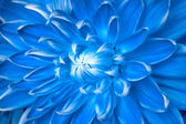 Unusual blue flower — Stock Photo