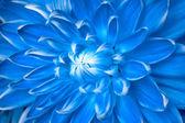 Unusual blue flower — Stock Photo