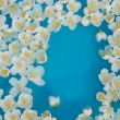 Stock Photo: White jasmin flowers in blue water
