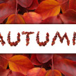 Autumn SALE — Stock Photo