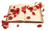 Autumn leaves on vintage book — Stock Photo