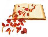 Autumn leaves on vintage book — Stock Photo