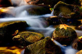 Autumn rivulet — Stock Photo