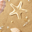 Cockleshells and a starfish lie on seaco - Stock Photo