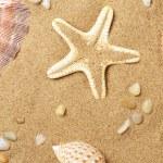 Cockleshells and a starfish lie on seaco — Stock Photo #1235727