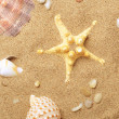 Cockleshells and a starfish lie on seaco — Stock Photo