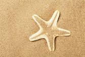 Starfish lie on seacoast — Stock Photo