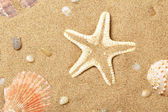 Seashells and a starfish lie on seacoast — Stock Photo