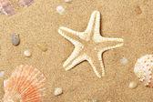 Seashells and a starfish lie on seacoast — Stock Photo