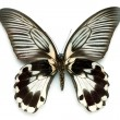 Butterfly series - Rare Beautiful Butter — Foto de Stock