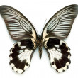 Stock Photo: Butterfly series - Rare Beautiful Butter