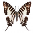 Butterfly series - Beautiful Butterfly — Stock Photo #1819966