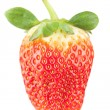 Macro food collection - Strawberry — Stock Photo #1922570