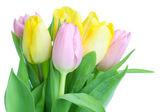 Beautiful tulip bouqet — Stock Photo