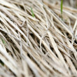 Dry grass — Stock Photo #1237016