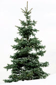 Christmas Fur-tree again white backgroun — Stock Photo