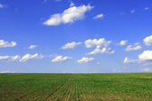 Green agricultural sow field — Stock Photo