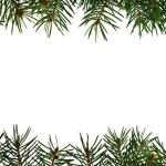 Fresh green fir branches — Stock Photo
