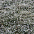 Background of frosty grass — Stock Photo