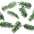 Several fir-trees branches — Stock Photo