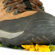 Hiking boot crushing flower — Stock Photo