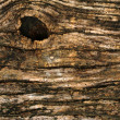 Bark of tree background — Stock Photo