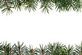 Fresh green fir branches — Stock Photo