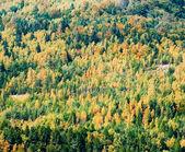 Herbst-wald-hintergrund — Stockfoto