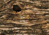 Bark of tree background — Stock Photo