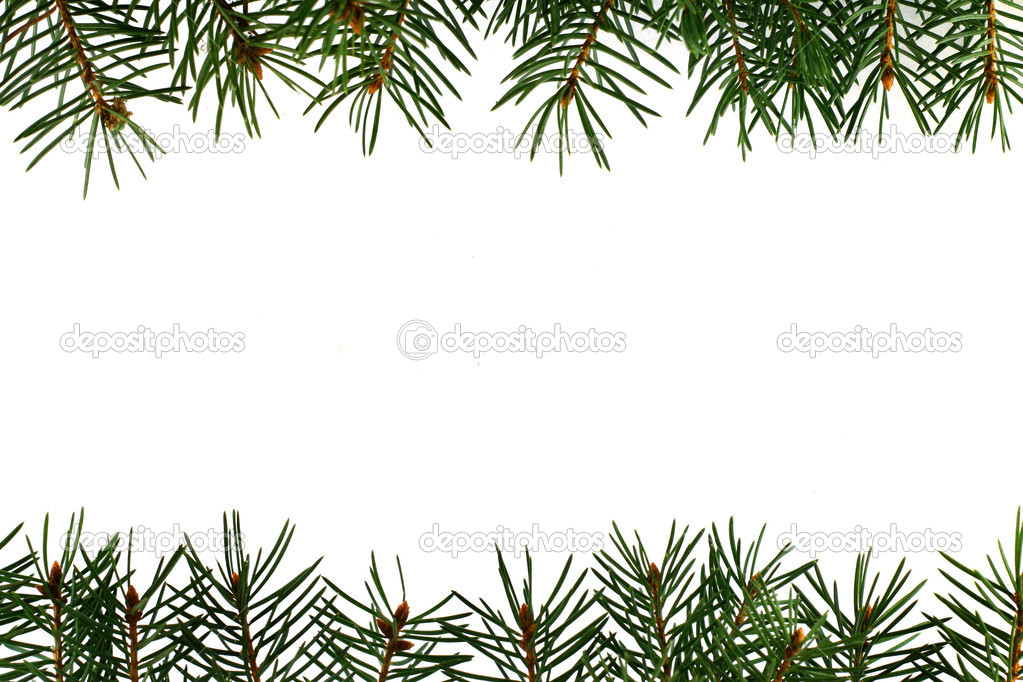 Fresh green fir branches isolated on white background  Stock Photo #1251032