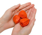 Female handful and physalis — Stock Photo