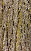Wood bark — Stock Photo