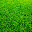 Close-up shot of a green grass lawn — Stock Photo #1222622