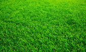 Close-up shot of a green grass lawn — Foto de Stock