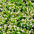 Close-up shot of a flower-bed — Stock Photo #1230964