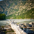 Altai — Stock Photo #1230967