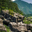 Altai — Stock Photo #1231077