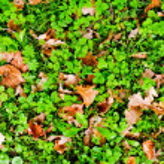 Autumn — Stock Photo #1231118
