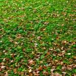 Autumn — Stock Photo #1231127