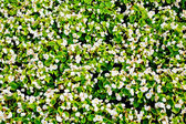Close-up shot of a flower-bed — Stock Photo