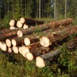 Stock Photo: Logging site