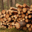 Stock Photo: At logging site