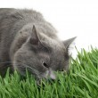 Cat in the grass — Stock Photo #1299433