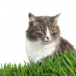 Cat in the grass — Stock Photo #1299434