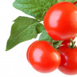 Red tomatoes on white background — Stock Photo