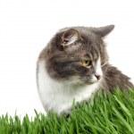 katt i gräset — Stockfoto